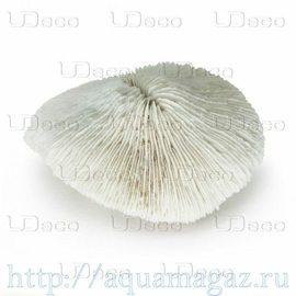 Коралл дисковидный UDeco Disk Coral L