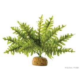 Растение Exo Terra Бостонский Папоротник малый