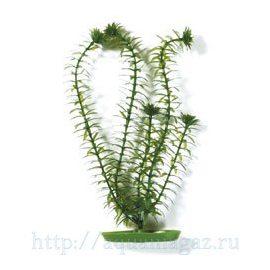 Растение Элодея 10см зеленое