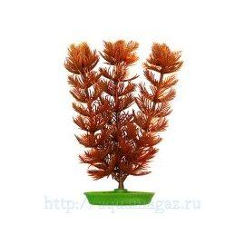 Растение Перистолистник 10см коричневое