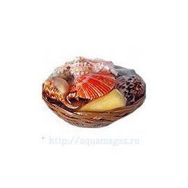 Набор раковин Фрукты моря крупные в корзинке (26см)