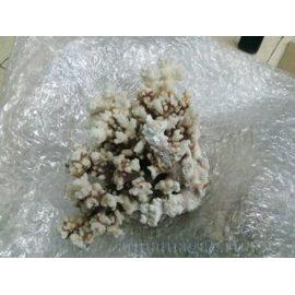 Коралл поциллопора  9-10 (coral flower) 23-26см
