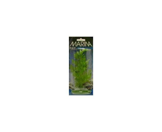 Растение Папоротник 20 см зеленое , фото , изображение 2