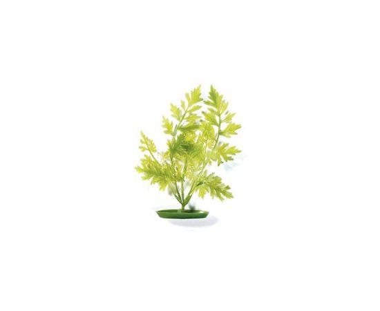Растение Папоротник 20 см зеленое , фото