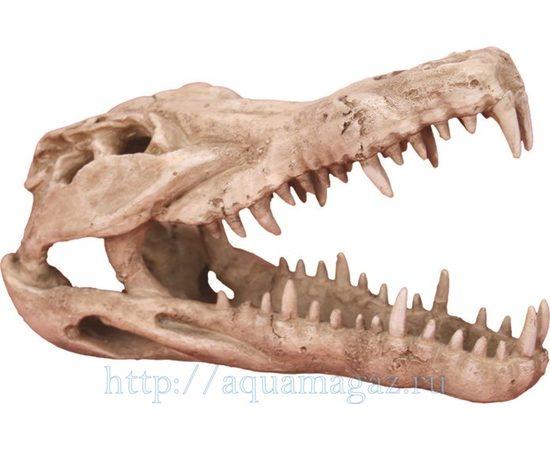Череп крокодила 250х112х152мм, фото
