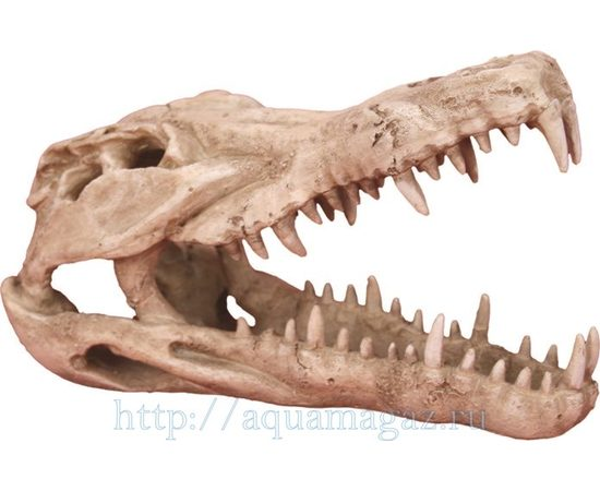 Череп крокодила 250х112х152мм, - 1 -aquamagaz.ru