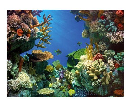 Фон Акула и Кораллы 49 см., фото 3