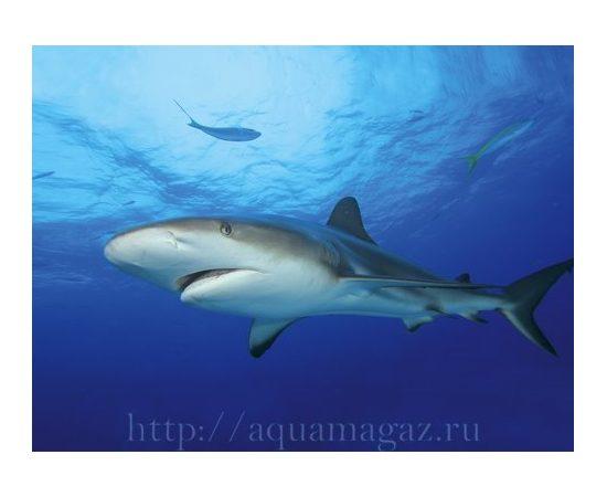 Фон Акула и Кораллы 49 см., фото 2
