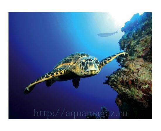 Фон Черепаха и Риф, фото , изображение 3