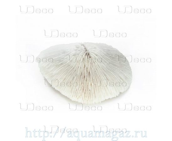 Коралл дисковидный UDeco Disk Coral M , фото