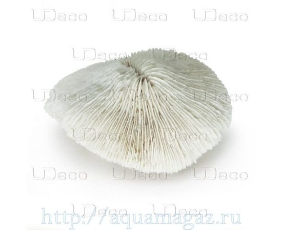 Коралл дисковидный UDeco Disk Coral L , фото