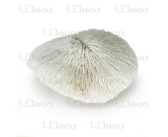 Коралл дисковидный UDeco Disk Coral L , фото , изображение 3