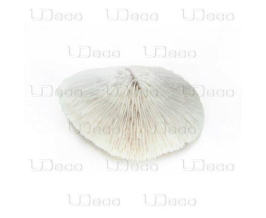 Коралл дисковидный UDeco Disk Coral M, - 3 -aquamagaz.ru