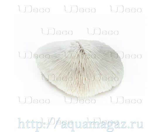 Коралл дисковидный UDeco Disk Coral M, - 2 -aquamagaz.ru