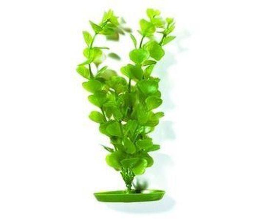 Растение пластиковое Монетница 30см зеленое, фото