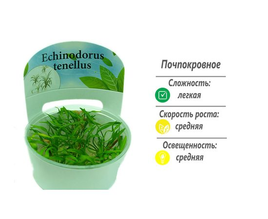 Эхинодорус тенелус Echinodorus tenellus, - 1 -aquamagaz.ru