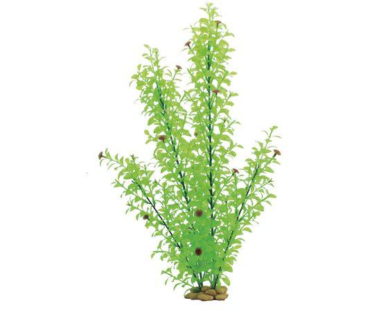 Растение Гигрофила многосемянная 60 см, фото