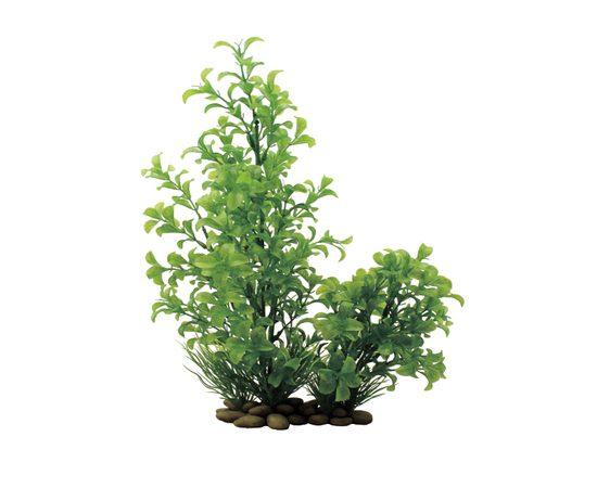 Растение Людвигия зеленая 30 см, - 1 -aquamagaz.ru