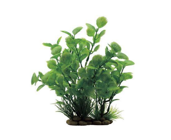 Растение Ливистона  20 см, фото