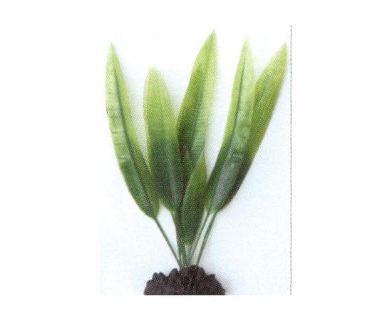 Растение Эхинодорус 20 см зеленое, - 1 -aquamagaz.ru
