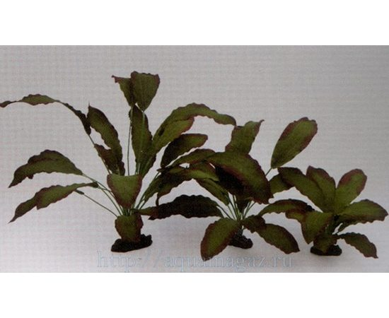 Растение Эхинодорус Розеа 20см шелковое, фото