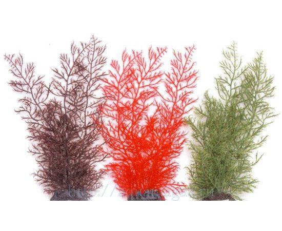 Растение Каменный мох 30 см зеленое, - 1 -aquamagaz.ru