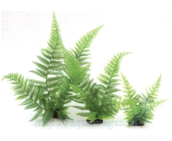 Растение Папоротник 30 см зеленое , фото
