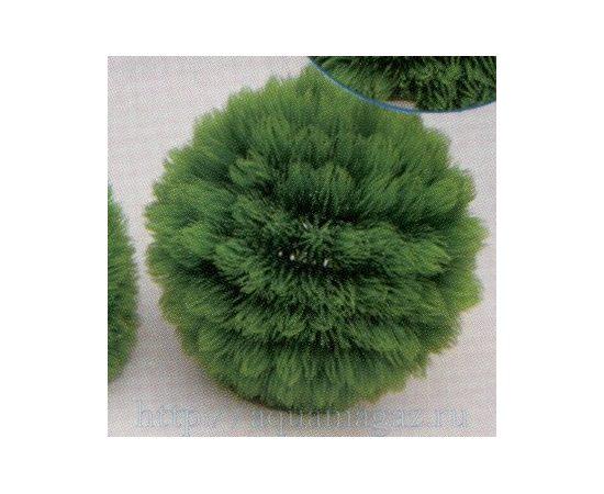 Растение Коврик-шар D22см зеленое, фото