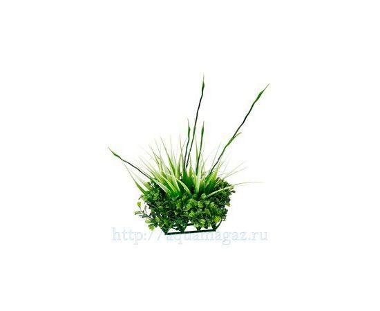 растение Fluval Chi, - 2 -aquamagaz.ru
