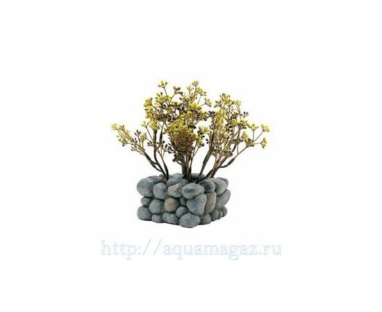 растение Fluval Chi с креплением, - 2 -aquamagaz.ru