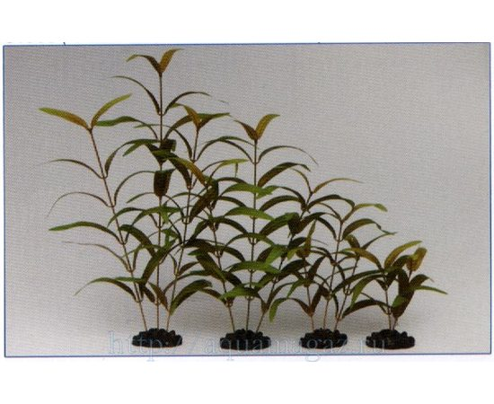 Растение Гигрофила узколистная красное 13см шелковое, фото