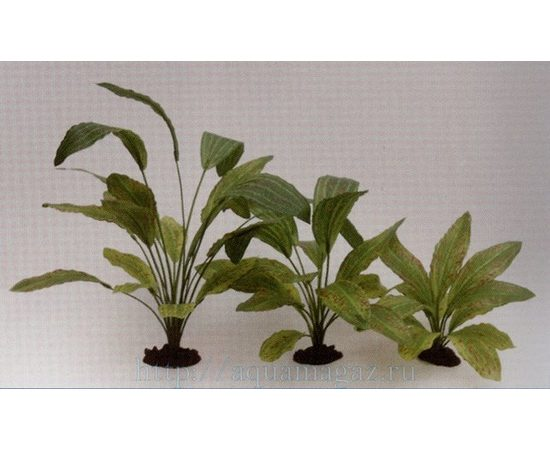 Растение Эхинодорус Оцелот Грин 13см шелковое, фото