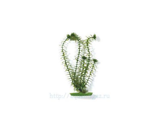 Растение Элодея 10см зеленое, фото