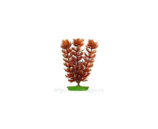 Растение Перистолистник 10см коричневое, - 1 -aquamagaz.ru