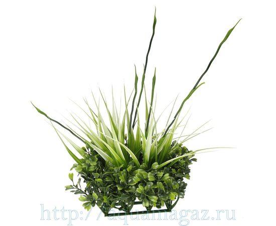растение Fluval Chi, - 1 -aquamagaz.ru