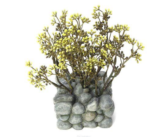 растение Fluval Chi с креплением, фото