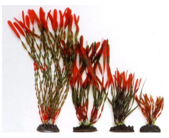 Растение Валлиснерия спиральная 40 см красно-зеленое , фото