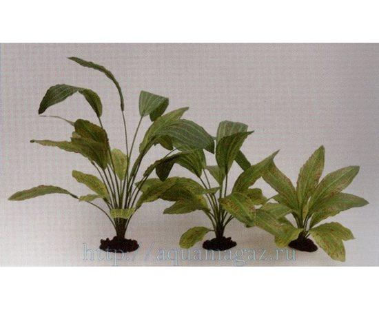 Растение Эхинодорус Оцелот Грин 30см шелковое, фото