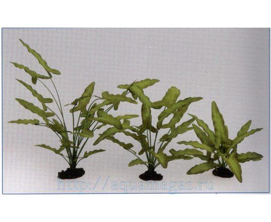 Растение Анубиас Хастифолия 30см шелковое, фото