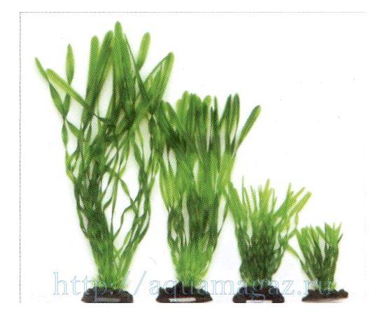 Растение Валлиснерия спиральная 30 см зеленое, - 1 -aquamagaz.ru