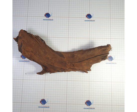 Коряга мангровая XL 35- 45см, фото , изображение 4