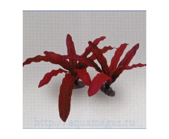 Растение Эхинодорус Рубин красное 20см шелковое, - 1 -aquamagaz.ru