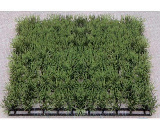 Растение Коврик 12,5х25см, зеленое