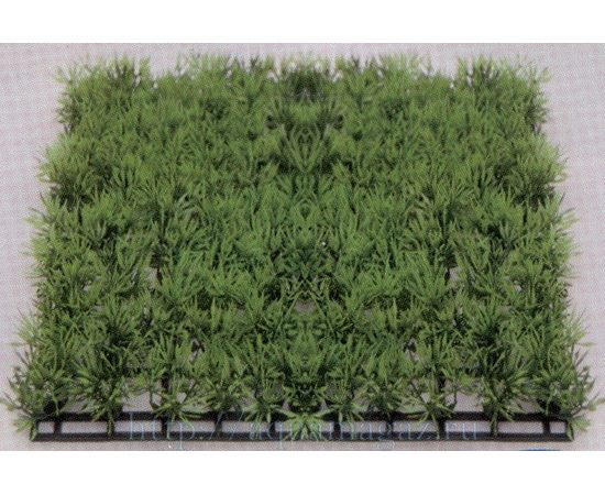 Растение Коврик 25х25 см зеленое, фото