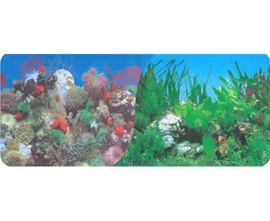Фон 50см. Кораллы синий и Растительный с белым камнем синий, фото