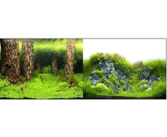 Фон 60см. Затопленный лес и Камни с растениями, фото
