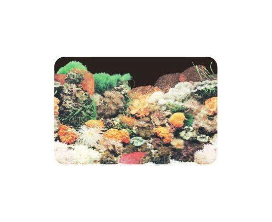 Фон 60см. Кораллы черный, фото