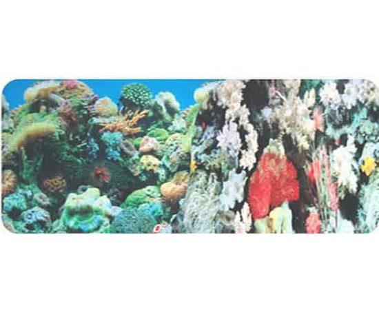 Фон 60см. Кораллы синий и Кораллы синий, фото