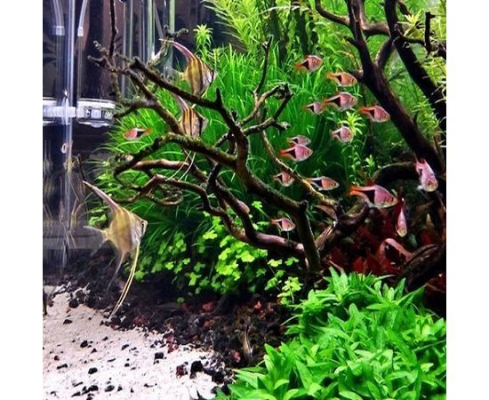 Обслуживание аквариума с живыми растениями, фото