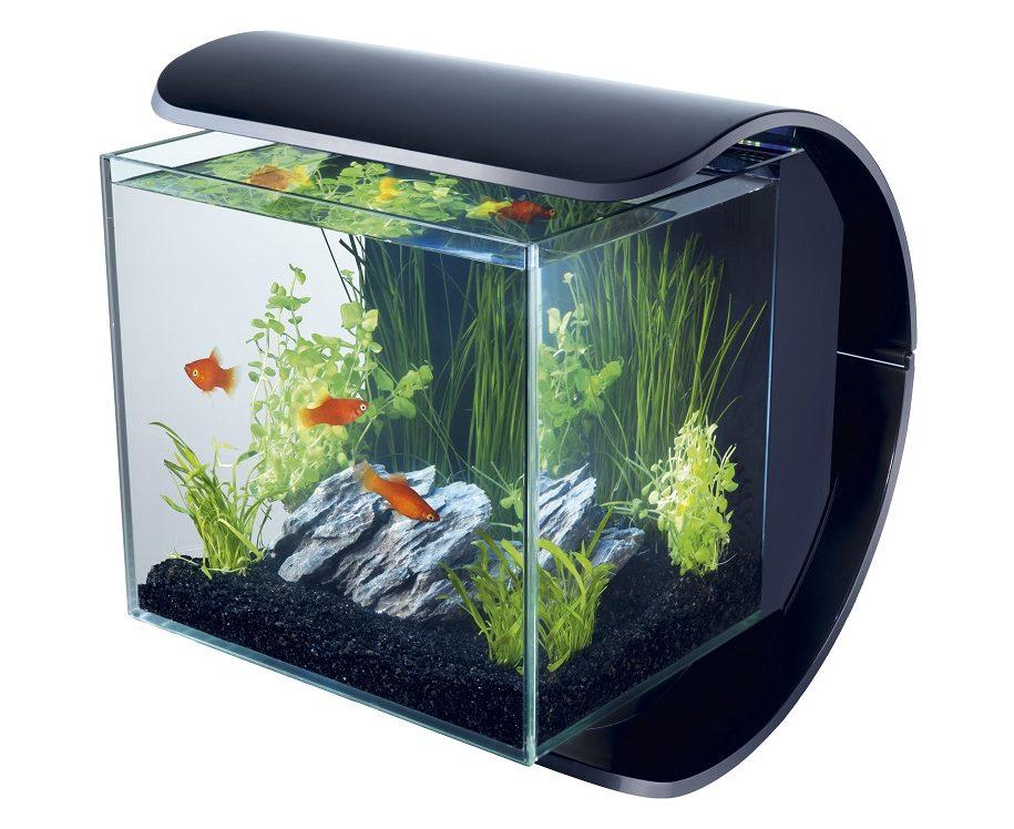 видны квадратные аквариумы картинки переснимаете